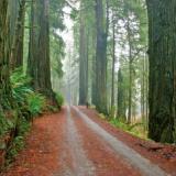 redsequoia